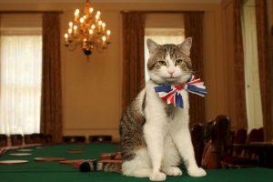 Getty Images Foto:4. ¿Podrás ser un adoptante responsable?. Imagen Por: