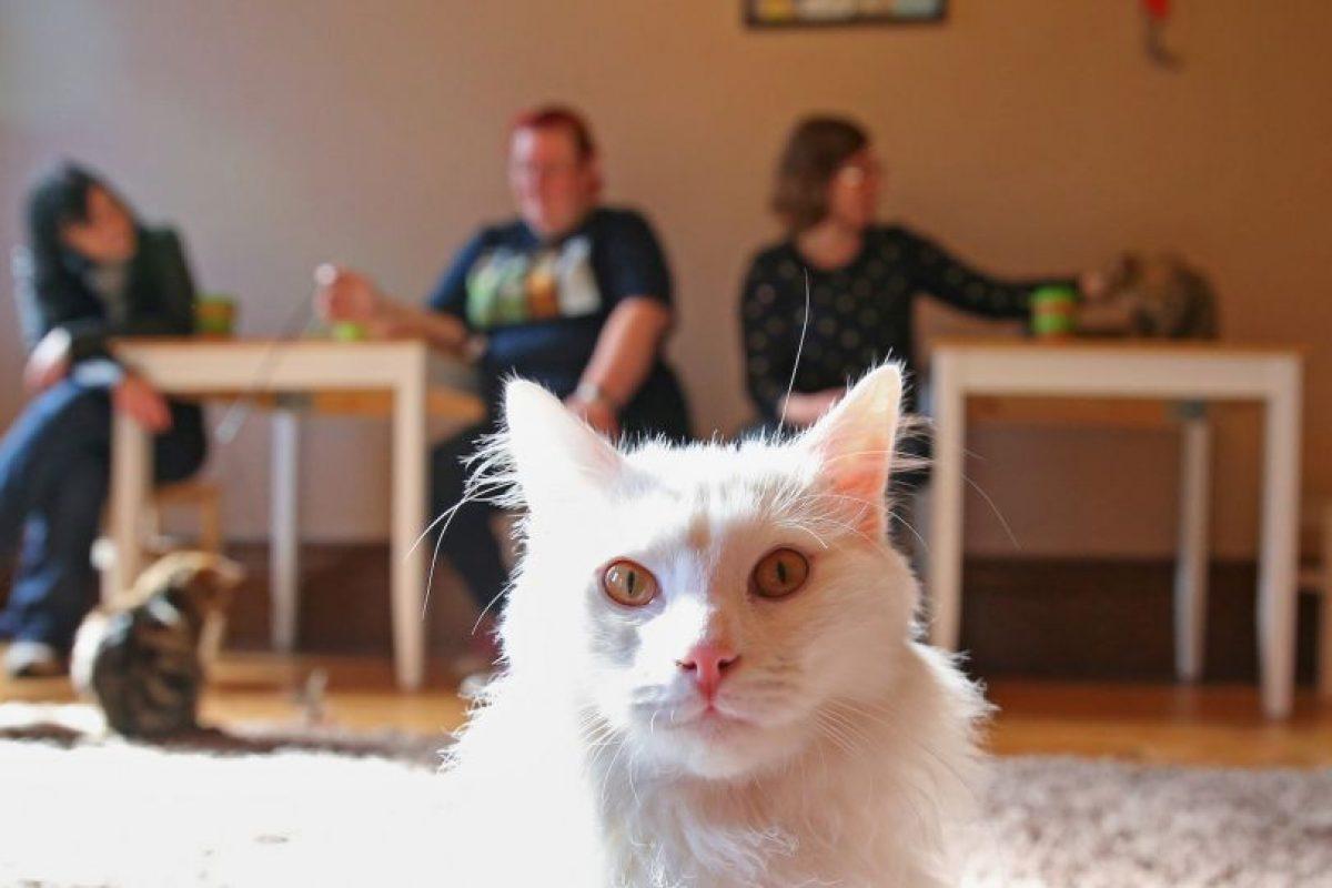 Getty Images Foto:4 preguntas antes de adoptar una mascota. Imagen Por: