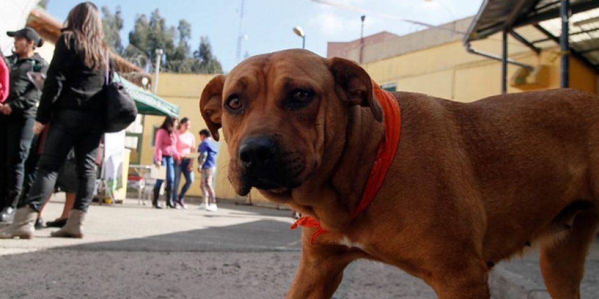 Corte ordena retiro de perros vagos en Coyhaique
