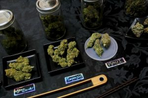El excedente de impuestos derivados de marihuana será usado para combatir el bullying Foto:Getty Images. Imagen Por: