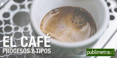 Infografía: el café, procesos y tipos