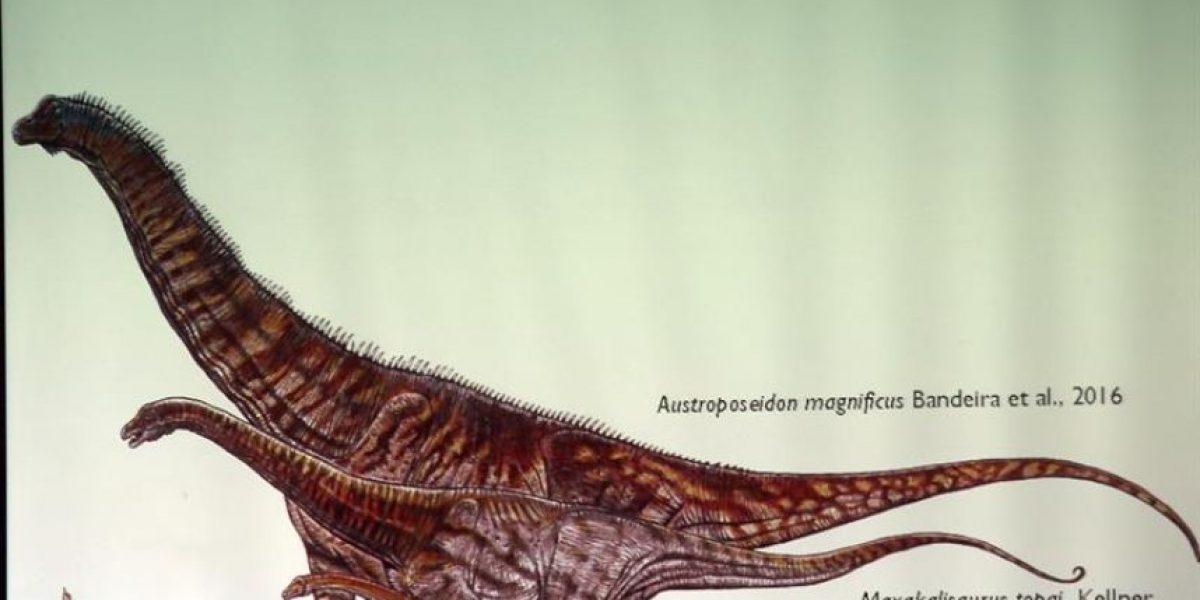 Investigadores anuncian el descubrimiento del mayor dinosaurio de Brasil