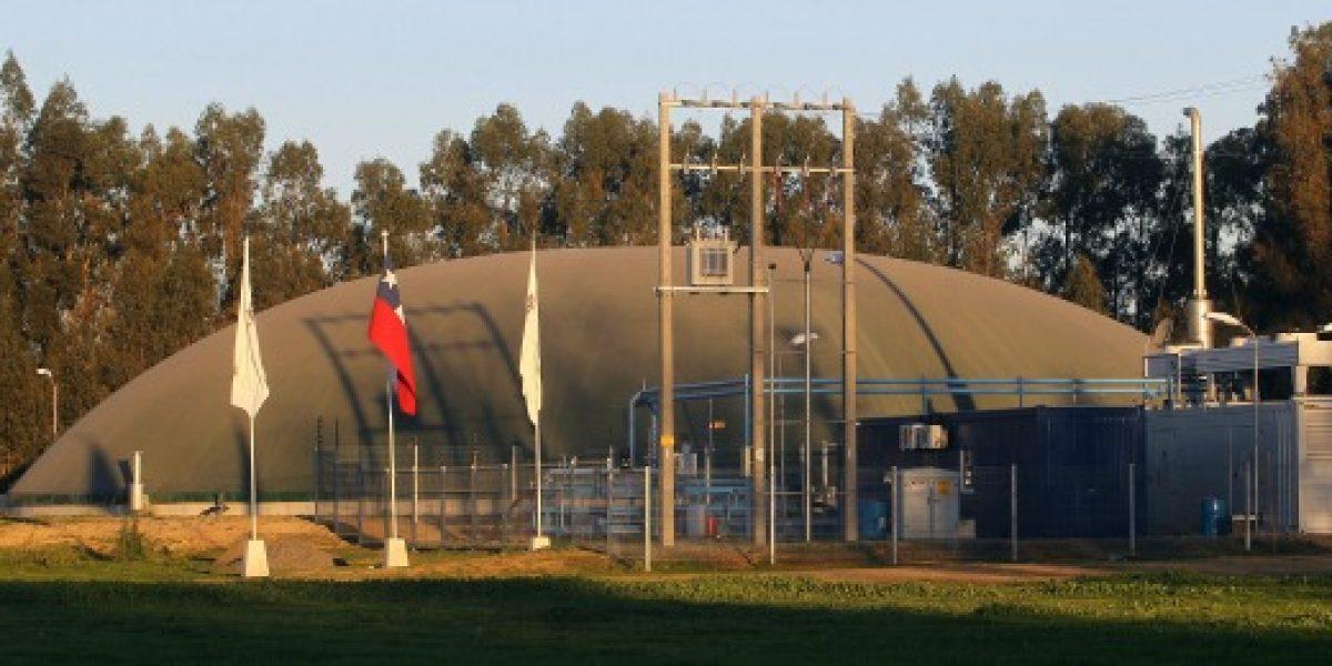 Sector porcino en Chile aporta energía limpia con 13 proyectos de biogás