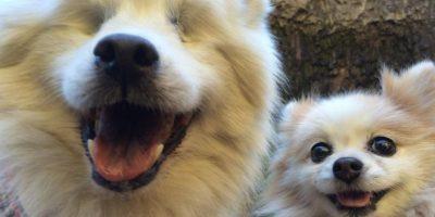 La historia del perro ciego y su lazarillo que enternece a las redes sociales