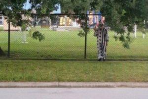 """Los """"avistamientos"""" de """"payasos asesinos"""" se reportan en todo el mundo Foto:Twitter.com/ClownSighting. Imagen Por:"""