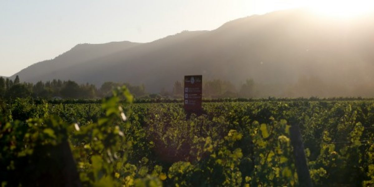 Exportaciones de vino crecen cerca de 10% en agosto