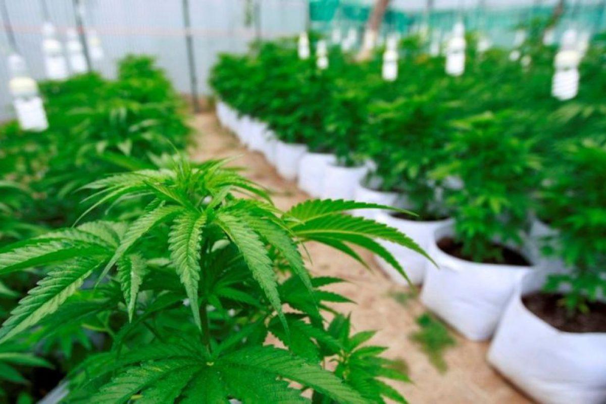 El fármaco será dispensado en farmacias y en centros asistenciales públicos y privados. Foto:Agencia UNO. Imagen Por: