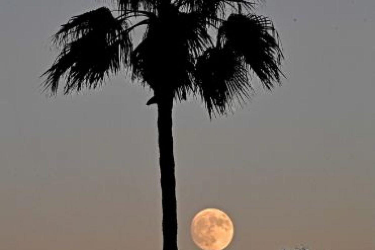 Indio, California, Estados Unidos. Foto:AFP. Imagen Por: