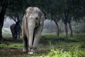 Los machos abandonan el rebaño entre los 12 y los 15 años Foto:Getty Images. Imagen Por:
