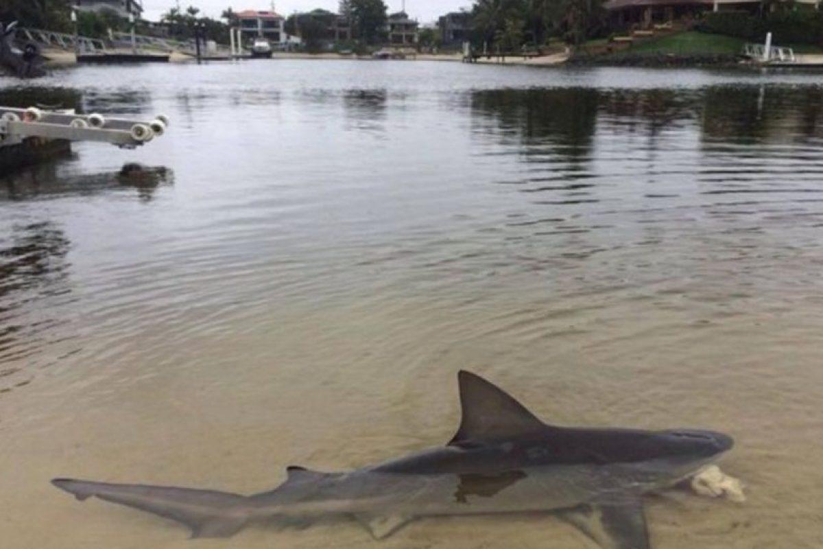 Porque uno puede hallar tiburones como si nada. Foto:Facebok. Imagen Por: