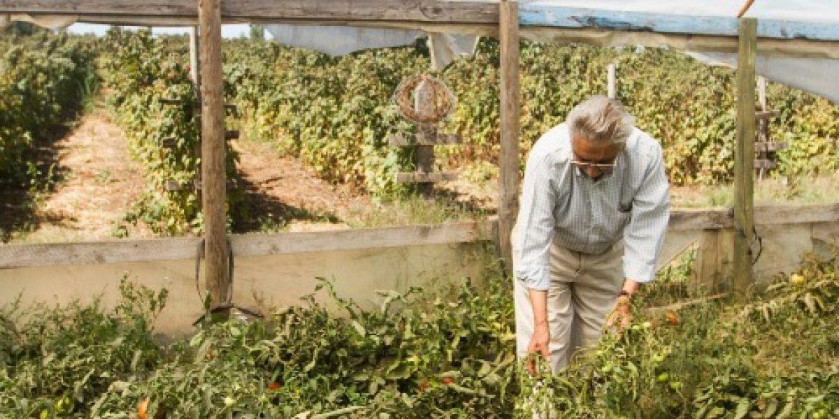 Agricultura proyecta leve mejora del sector, con crecimiento de 3,1% para 2017