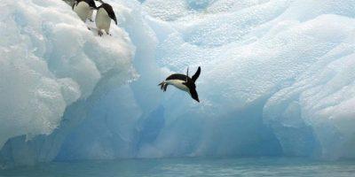 Acuerdan crear la mayor reserva marítima del mundo en la Antártida