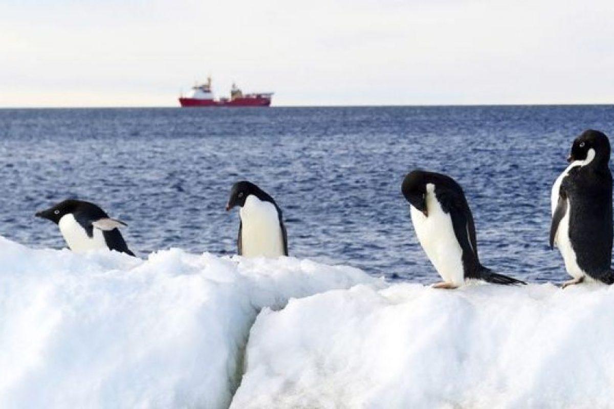 El acuerdo forjado por la Comisión para la Conservación de los Recursos Vivos Marinos Antárticos (CCRVMA) en Hobart, Australia, logró finalmente la creación de una reserva gigante en la zona del mar de Ross, indicó el ministro de Exteriores de Nueva Zelanda, Murray McCully. Foto:Afp. Imagen Por: