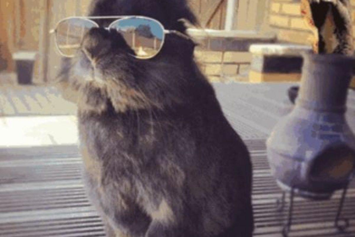 Conejo con lentes y Photoshop Foto:Reddit. Imagen Por:
