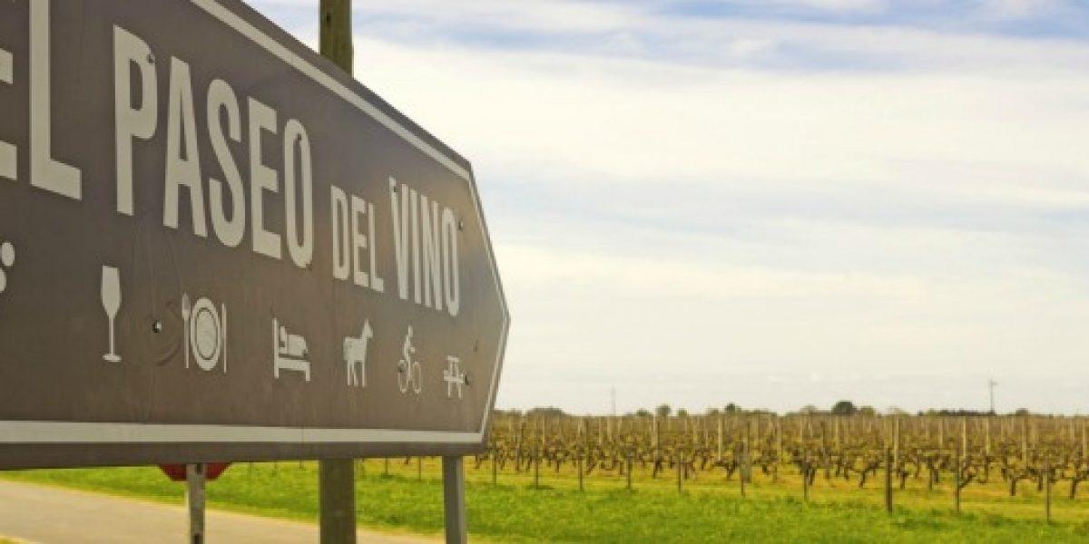 Conoce Uruguay a través del vino