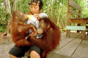 5 datos que deben conocer sobre los orangutanes Foto:Getty Images. Imagen Por:
