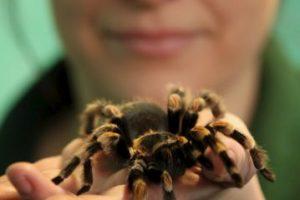 Normalmente las arañas devoran a sus propias presas, pero lo curioso sobre algunas arañas, es que aprovechan los insectos que quedaron atrapados en telarañas ajenas para alimentarse Foto:Getty Images. Imagen Por: