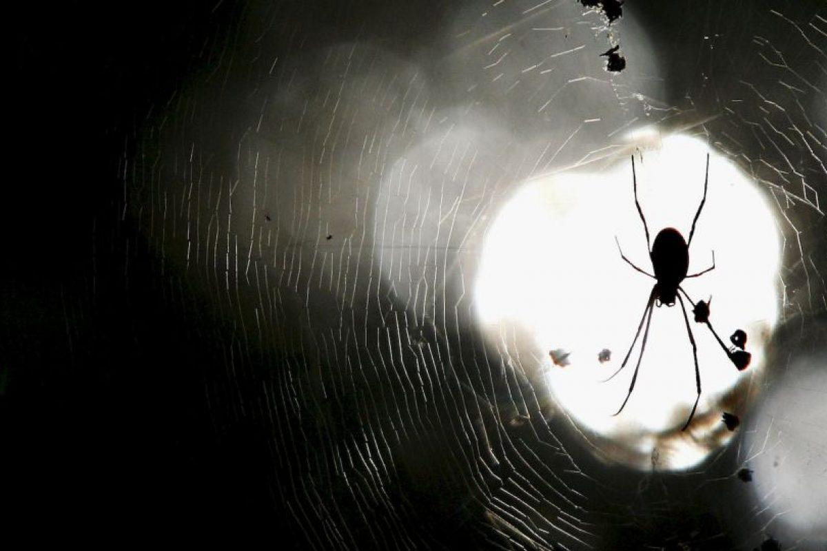 Datos que deben de conocer sobre las arañas Foto:Getty Images. Imagen Por: