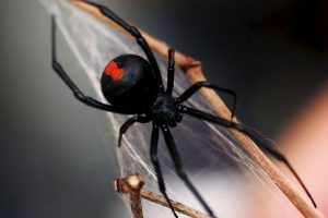El 50% de las mujeres y el 16% de los hombres sufre de aracnofobia, un miedo irracional a las arañas. Foto:Getty Images. Imagen Por: