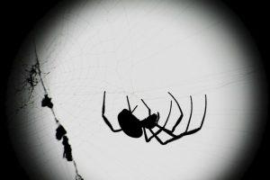 La mayoría de las arañas tienen entre 6 y 8 ojos. Foto:Getty Images. Imagen Por: