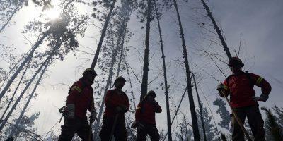 Incendios forestales persisten en Valparaíso