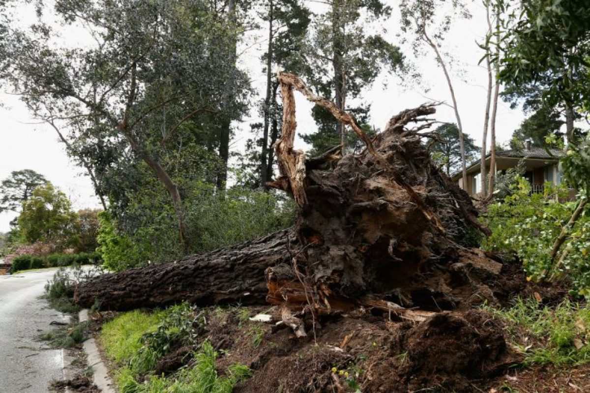 Talar árboles sin una eficiente reforestación resulta en un serio daño al ecosistema. Foto:Getty Images. Imagen Por: