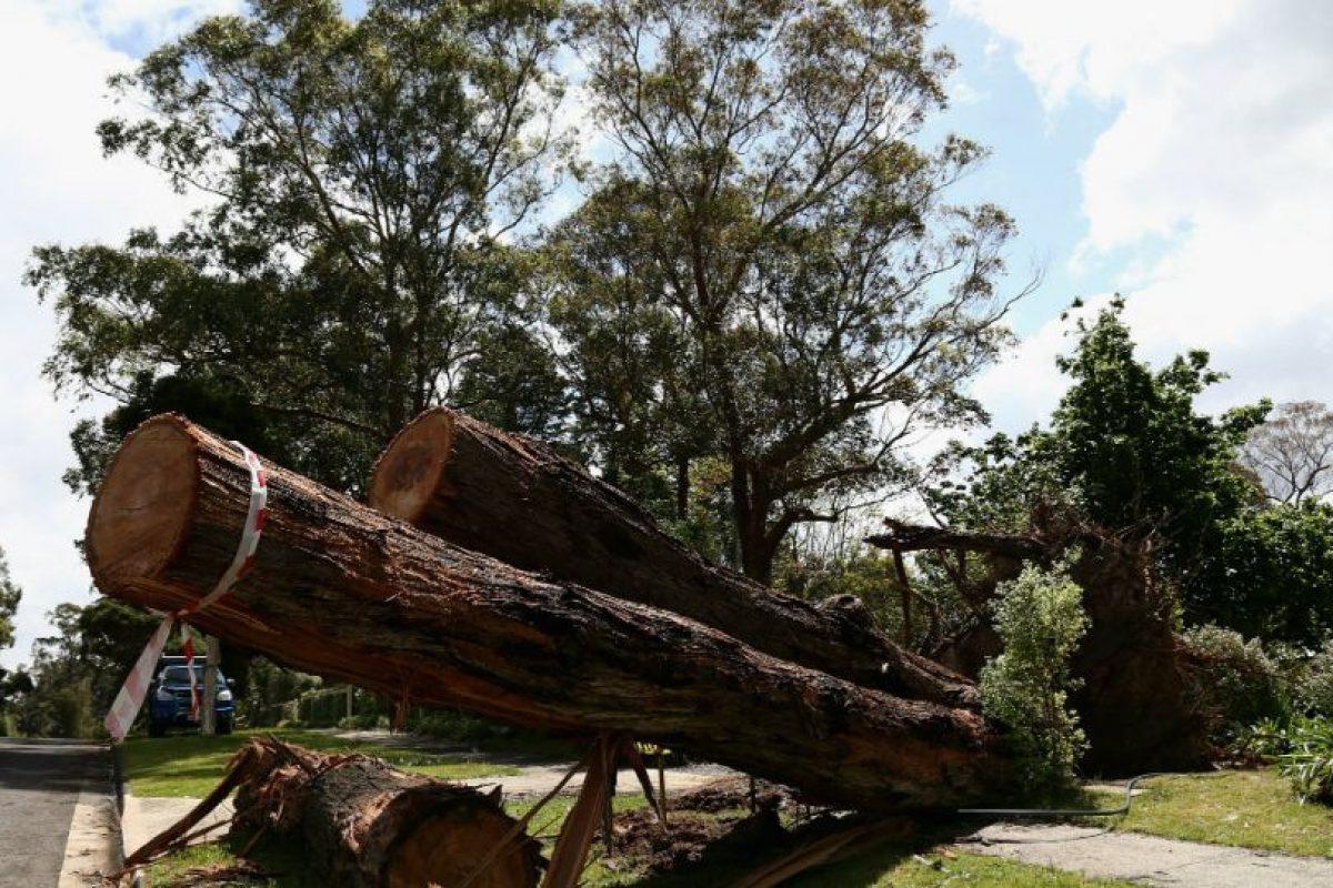 Las regiones deforestadas tienden a una erosión del suelo y frecuentemente se degradan a tierras no productivas. Foto:Getty Images. Imagen Por: