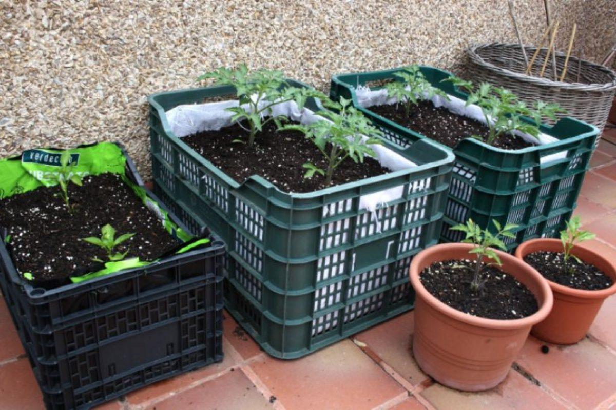 El cultivo de huertos urbanos puede realizarse en espacios comunitarios abiertos y también en espacios privados reducidos como terrazas de departamentos. Foto:Captura. Imagen Por: