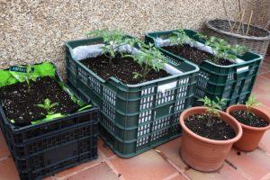 El cultivo en terrazas de departamento se puede realizar siempre y cuando llegue buena luz solar. Como macetas puedes utilizar elementos reciclados para disminuir costos. Foto:Captura. Imagen Por: