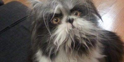 ¿Es un perro o un gato? el animal que tiene a todos confundidos en Internet