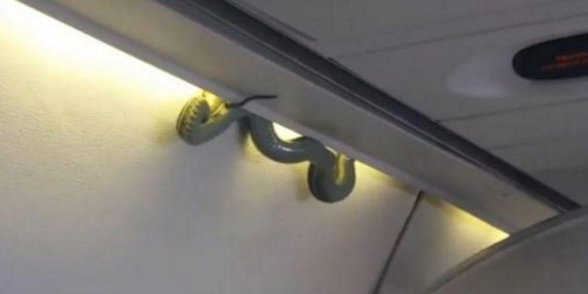 Sorpresa y miedo entre pasajeros por serpiente descubierta en pleno vuelo