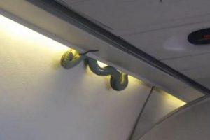 El reptil se encontraba en uno de los costados superiores de la cabina de pasajeros, entre el portaequipaje y la pared del avión, junto a las luces. Foto:Reproducción Twitter@inda_medina. Imagen Por: