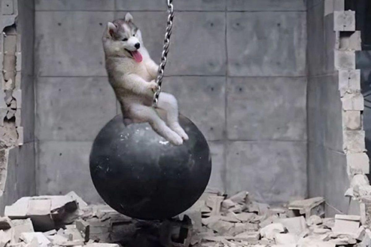 Este adorable perrito bebé quedó atrapado en un árbol. La imagen llegó a Internet, y claro, los memes y el Photoshop hicieron lo suyo. Foto:Reddit. Imagen Por: