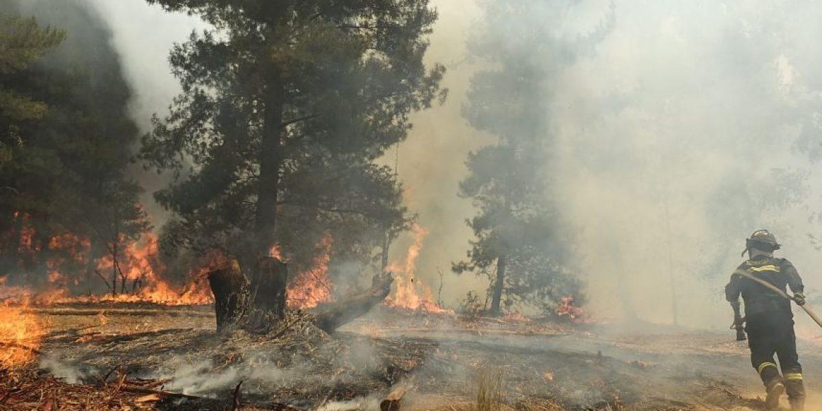 Bomberos y Conaf combaten extenso incendio forestal en Colina