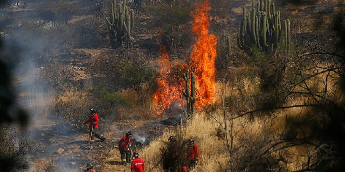 San Bernardo: incendio en cerro Chena deja 120 hectáreas quemadas y dos personas heridas