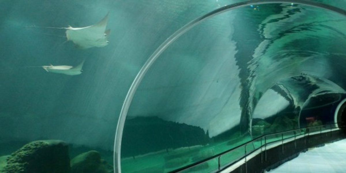 Brasil inaugura el acuario más grande de Sudamérica