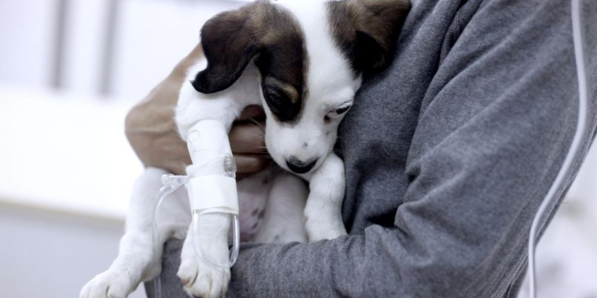 Denuncian masivo envenenamiento de perros en el Cerro Manquehue