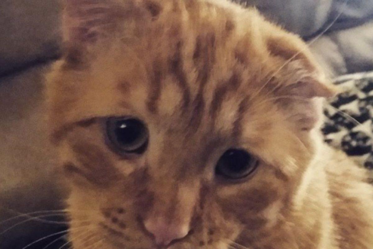 El gato había llegado hasta un albergue de la Sociedad Contra la Crueldad a los Animales, en Londres, con heridas profundas, cortes en su rostro y un severo daño en su columna, todo producto de un ataque de otro animal. Foto:Reproducción Instagram. Imagen Por: