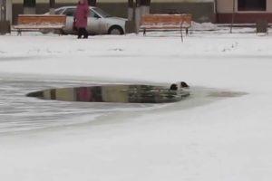 El hombre se decidió a sacar al animal del agua, que permanecía inmóvil al borde de un agujero en el hielo que cubría la laguna. Foto:Reproducción. Imagen Por: