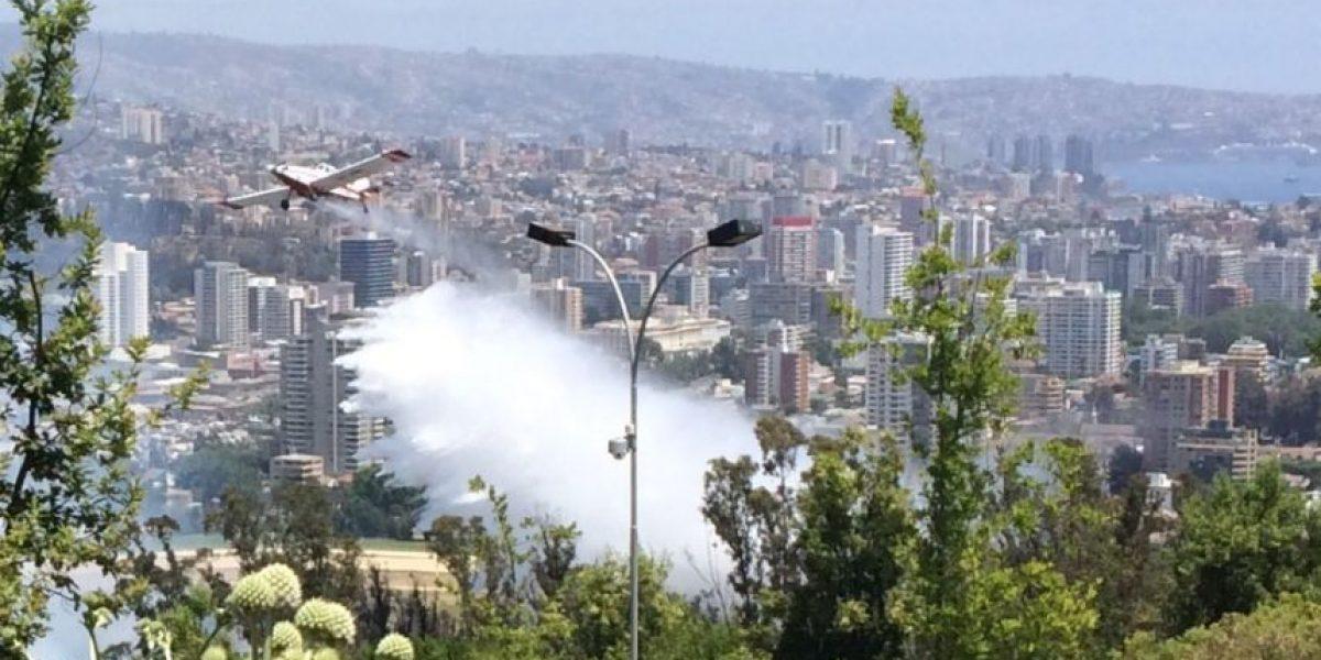 Viña del Mar: controlan incendio forestal que afectó a las cercanías del Valparaíso Sporting Club