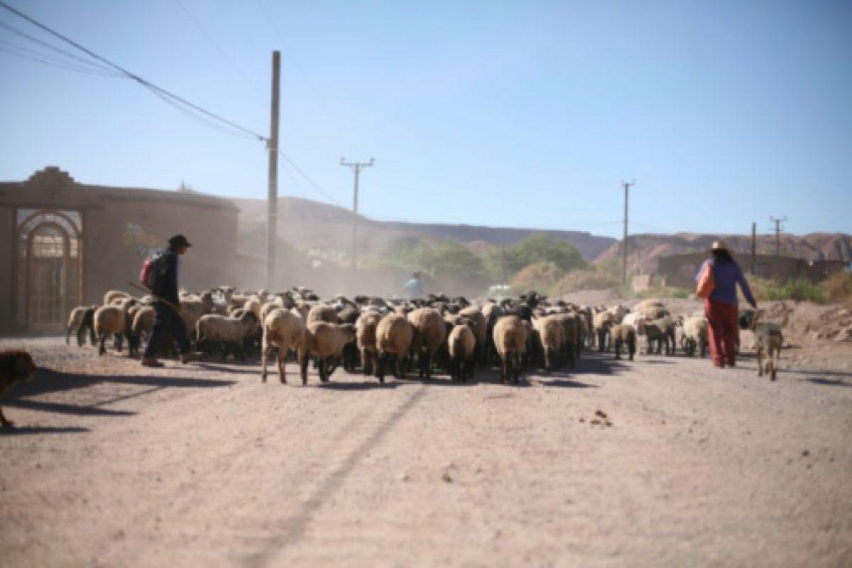 """""""Si la violencia contra la mujer tiende a invisibilizarse en muchos espacios, en el mundo rural esta realidad es especialmente crítica"""", señaló la Presidenta Michelle Bachelet. Foto:Getty. Imagen Por:"""