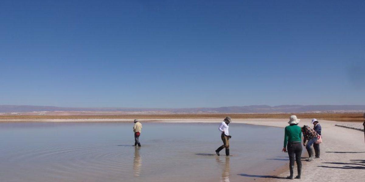 Prohíben el baño en Aguas de Laguna Cejar por su alto nivel de arsénico