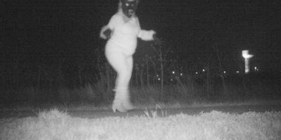 Buscan capturar un animal salvaje y descubren unas imágenes muy extrañas