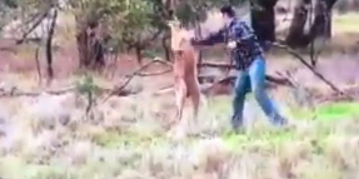 La desgarradora historia tras el video en que hombre boxea con un canguro en Australia