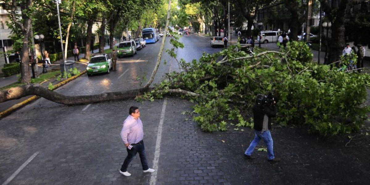 Un lesionado deja caída de árbol en Providencia