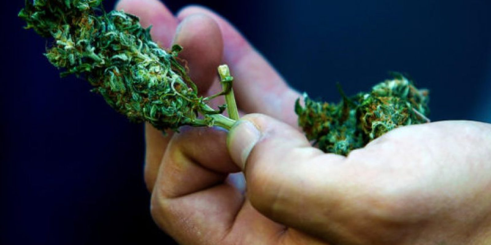 """La droga del tipo cripy es denominada la """"súper marihuana"""", debido a que tiene un poder alucinógeno 4 veces mayor que la tradicional. En el mercado ilegal alcanza un valor de entre $10 mil y $ 15 mil la dosis de 1 gramo, por lo que este decomiso fue avaluado en al menos $2.350 millones. Foto:Agencia UNO / Imagen Referencial. Imagen Por:"""