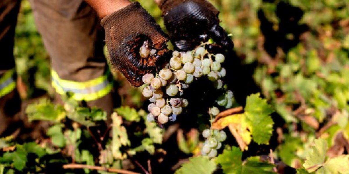 Lluvias moderadas de este viernes preocupan al sector frutícola