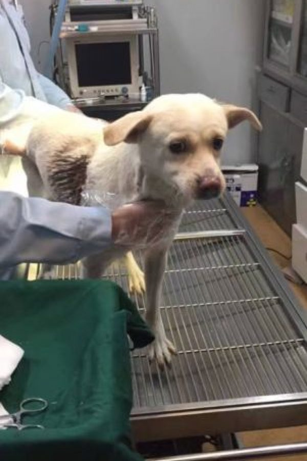 El animal fue atacado por un sujeto que pretendía cazarlo y venderlo por su carne. Foto:Reproducción Facebook. Imagen Por: