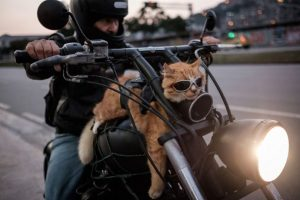 Animales Foto:AFP. Imagen Por: