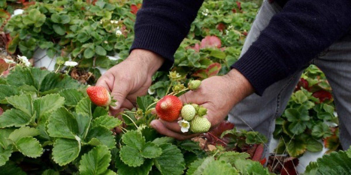 Convocatoria busca a los mejores emprendimientos agroalimentarios de Chile